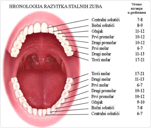 Stalni Zubi